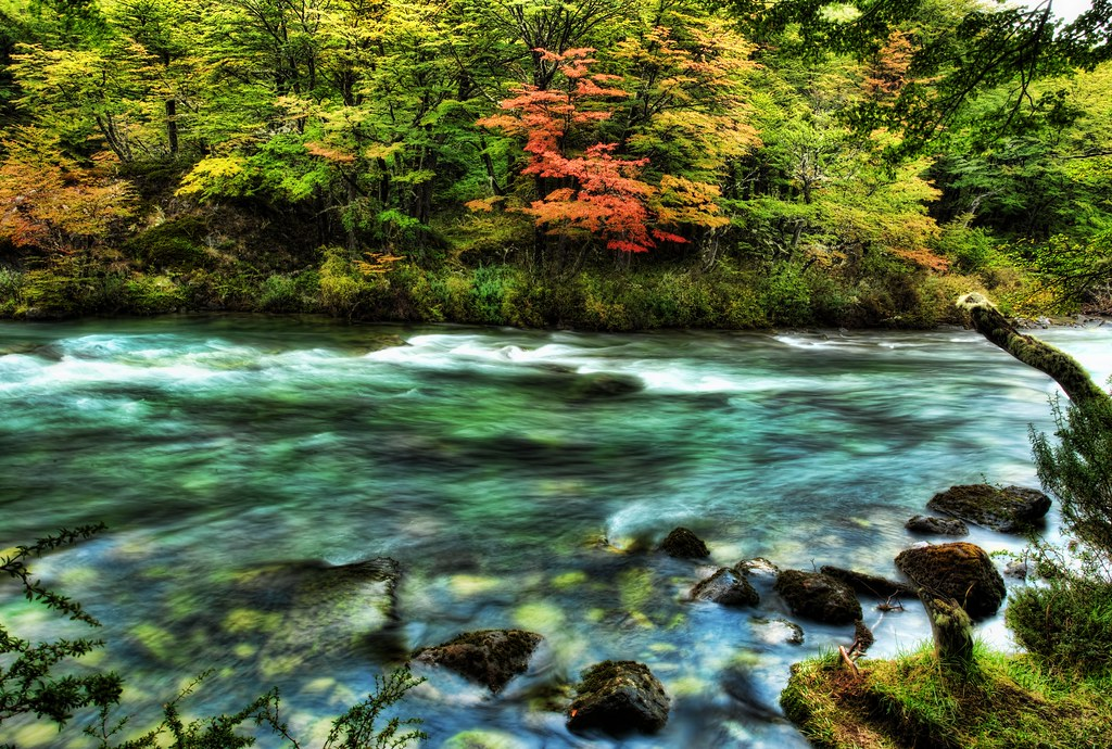 The River Passed the Quivering Forest in the Autumn