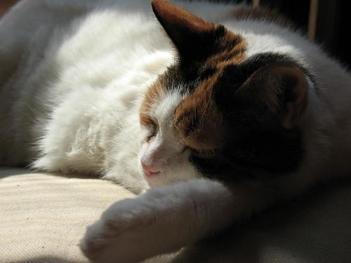 Sleepy Inu closeup