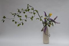 Fiona's Ikebana 1 July 2009 (l1nda1) Tags: flower ikebana floralart sogetsu japaneseflowerarrangement