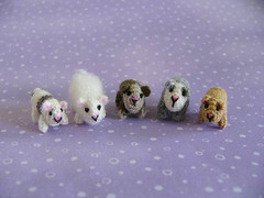 Guinea Pigs (MUFFA Miniatures) Tags: pet anime cute miniature funny doll guineapigs crochet pigs amigurumi hamsters dollhouse muffa dollpet cdhm threadanimals threadminiature