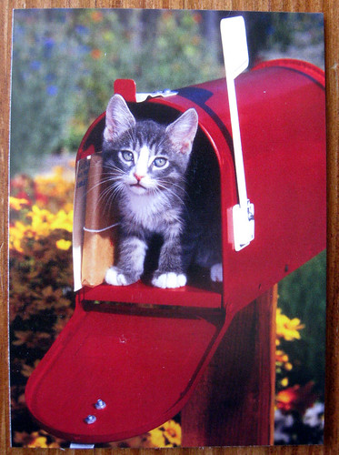 Kitten in the mailbox