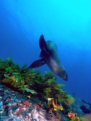 R0010975 (aironerwan) Tags: island 09 montague