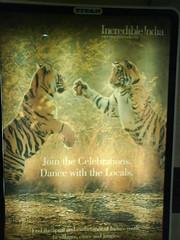 Lipstick tigers