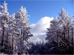 Winter sky (Stella VM) Tags: blue winter sky white snow bulgaria vitosha        platinumphoto goldstaraward