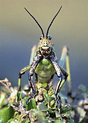 Ol' Bug Eyes (photo61guy) Tags: macro