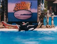 The Shamu Adventure (Elysia in Wonderland) Tags: world california blue sea holiday water los angeles totem canoe killer whale poles orca shamu elysia