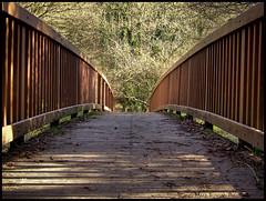 The White Bridge. (Stanegg) Tags: wood bridge trees light landscape woods path cleveland fujifilm