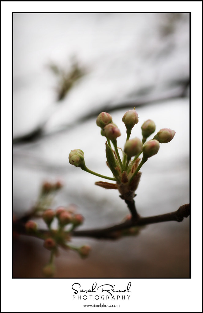 buds and blooms 01