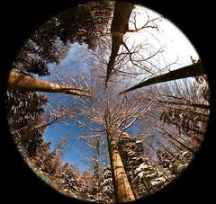 Peleng Forest (Rolf F.) Tags: trees winter tree nature forest canon landscape eos switzerland interestingness interesting low perspective zug fisheye explore 5d 8mm landschaft wald circular peleng baar canoneos5d peleng8mmf35fisheye baarburg zirkular