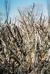 앙상한 가지의 봄