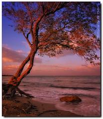 Ashore (tolis*) Tags: sea sky tree beach canon island evening long exposure waterfront roots wave tokina greece ashore chios eos50d tolis favemegroup3   flioukas