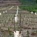 14000 saplings are planted