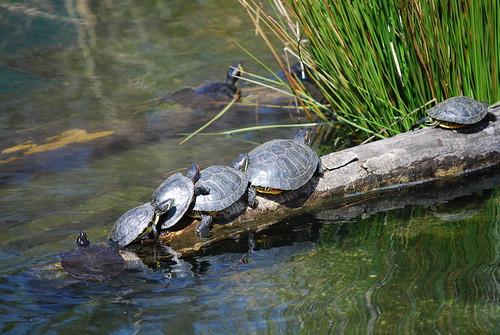 Turtle Chain