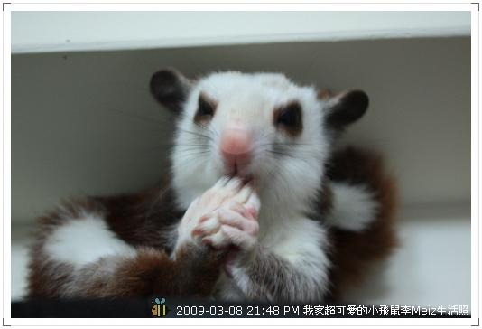09年二三月小飛鼠Meiz生活照 (12)
