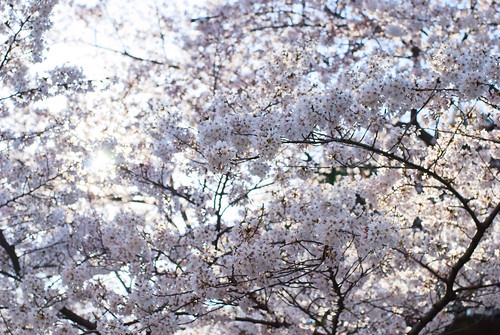 Ueno Park 04
