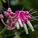 BotanicalGardenOrchids-71