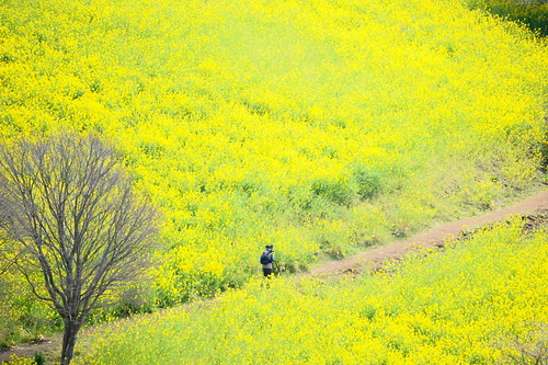 a photographer in flowers