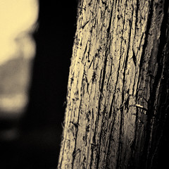 Tree trunk (manganite) Tags: plant tree monochrome weather yellow digital photoshop germany square de geotagged iso100 nikon europe bonn dof bokeh tl sunny monotone treetrunk trunk cropped d200 nikkor dslr toned f25 lightroom 50mmf18 botanischergarten northrhinewestphalia nikond200 manganite colorefexpro 1500sec repost1 date:month=april date:day=10 silverefexpro date:year=2009 format:orientation=square format:ratio=11 1500secatf25 geo:lon=7093328 geo:lat=50723491