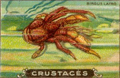 crustacés 11