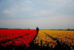 Day 312 of 365 (Just a guy who likes to take pictures) Tags: flowers blue red portrait sky man holland color colour male me nature netherlands colors dutch yellow self photography glasses licht three spring europa europe colours fotografie photographie tulips five den nederland thenetherlands natuur moi days tulip fields holanda tage 365 six portret lente ich paysbas ik blauwe bloemen bollen bril aan zelf niederlande ism egmond tulpen noord binnen the kleur tulp dagen woche mij photoperday hoef bloembollen tulps 365days oneperday i pictureperday 365pics 365dagen rinnegom