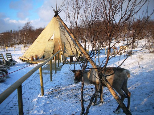 Kirkenes Reindeer Park Resort in Norway #1