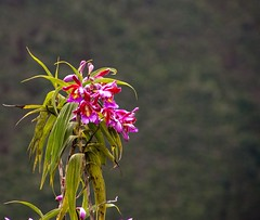 Flowers at Machu Picchu