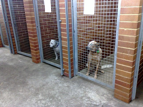 Charlie & Molly Impounded