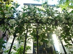 Savannah spring 09 019