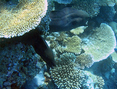 Bathala underwater (Franco Caruzzo) Tags: world trip sea panorama india holiday fish color male nature canon landscape shark asia mare underwater snorkel nemo scuba diving natura powershot snorkeling pesci snorkelling sharks reef maldives colori isle 2009 viaggio a75 manta ari franco corals maggio waterproof overview isola atoll maldive mante canonpowershota75 corallo squalo batala sottacqua barrieracorallina atollo bathala coralli squali trigone francocaruzzo caruzzofranco trigoni atollodiari caruzzo maggio2009 arinord 3maggio2009 arinorth
