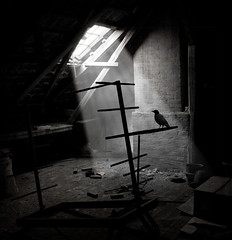Caged (- Peter Johansen -) Tags: light blackandwhite bw bird window loft denmark rack attic rays crow lys fugl danmark 2009 sortoghvid krage omot solstrler artlibres theunforgettablepictures phvalue storybehindimage daarklands masterpiecesofphotography selectbestfavorites sailsevenseas
