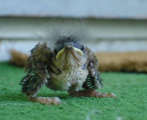 the curious case of benjamin sparrow