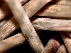 stuzzicadenti (Luciphoto) Tags: macro toothpick raynox stuzzicadenti