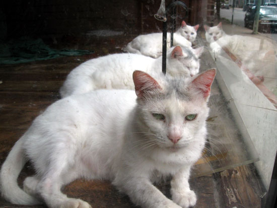 Window Cats (Click to enlarge)