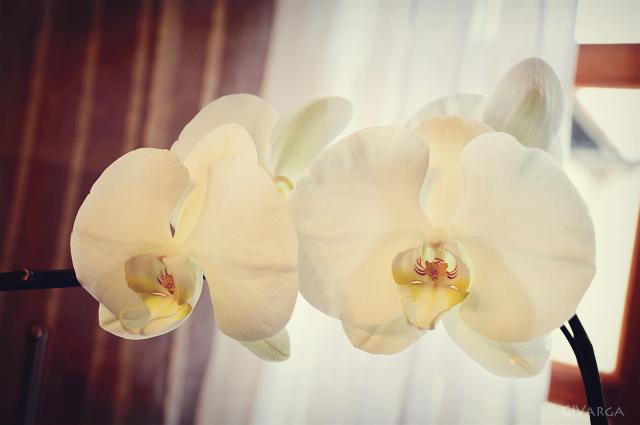 orquídea_2
