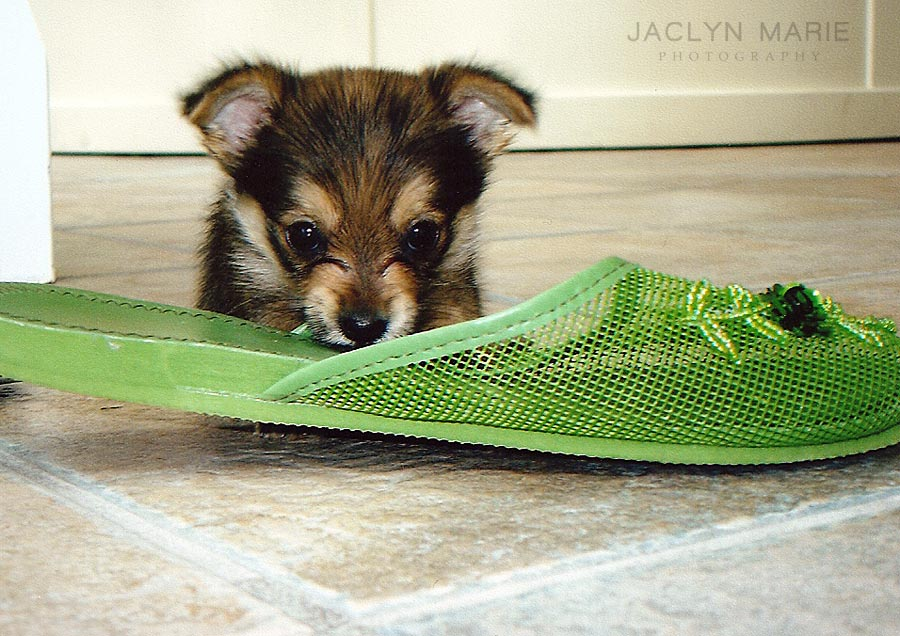 puppy photo with shoe