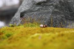 DV8_0688 (thunder_e_1) Tags: mossy narrows