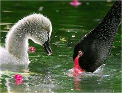 #399  Watch and Learn (John&Fish) Tags: wild bird nature wow taiwan best 100 1001nights naturesfinest wowiekazowie alemdagqualityonlyclub 100commentgroup lesamisdupetitprince alittlebeauty greatshotss