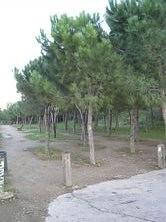 Gran Vista
