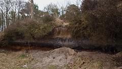 Black gold! (ednl) Tags: holland netherlands outdoors walk heath coal groeneveld heide crosssection baarn soest destulp zandverstuiving provincieutrecht utrechtprovince nswandeltocht pijnenburg devuursche