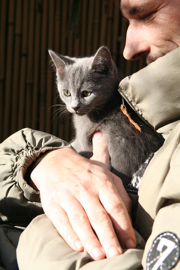 Kittens of Pegusha - Page 3 3340403083_b43140c9c6_b