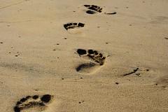 Pasos (Esparta) Tags: beach geotagged mexico sand playa arena acapulco mx piedelacuesta mex guerrero pasos gro geo:lat=169058 geo:lon=99983902 mexico:state=guerrero mexico:estado=guerrero mexico:state=gro mexico:estado=gro