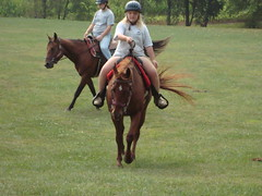 ac4h- Casey (Another Chance for Horses) Tags: horse chestnut ac4hcom