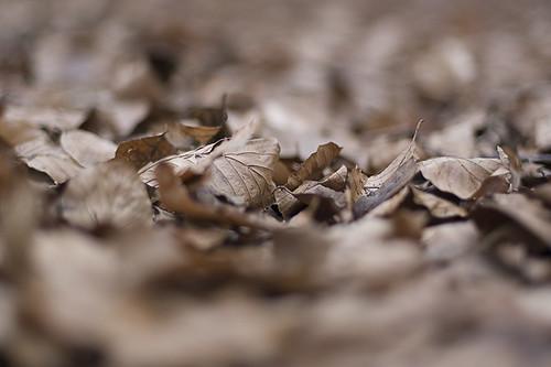 Dead leafs.. (by Hamsteren)