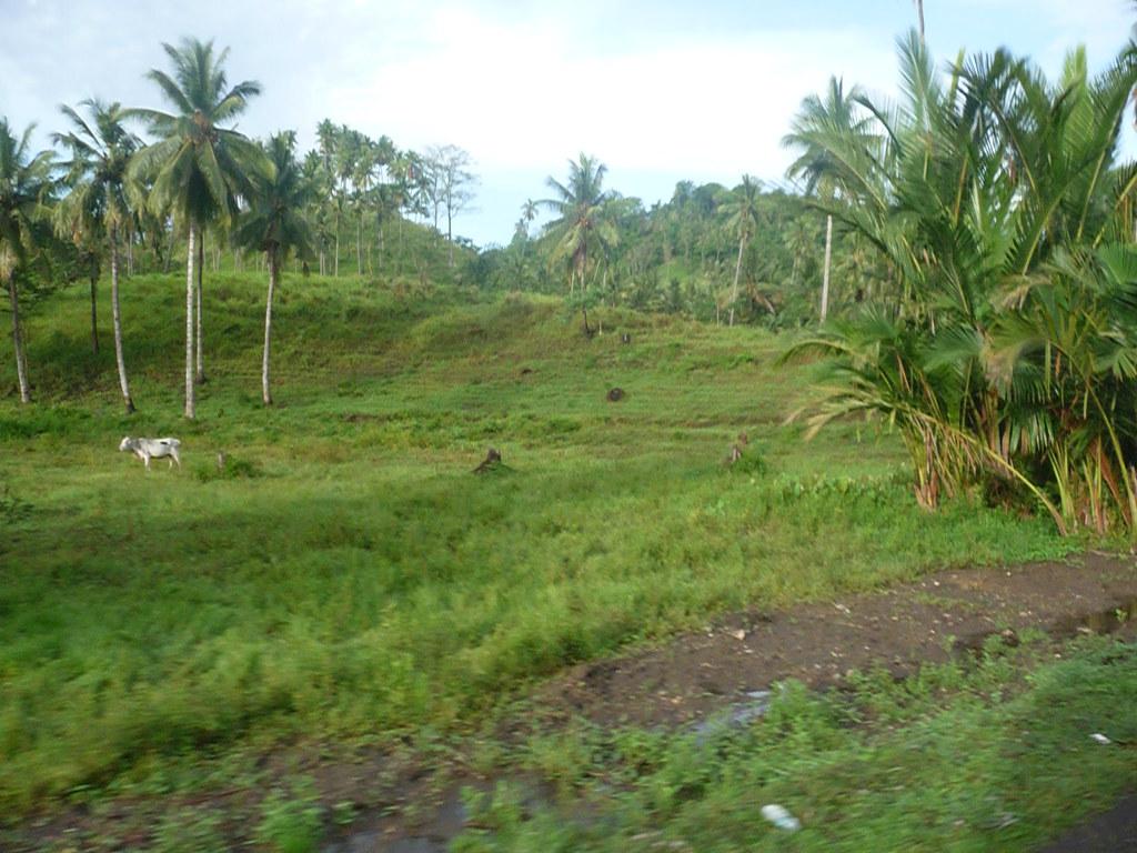 Gorontalo (13)