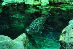 20090210 Trip to Genoa (alexis.maldonado) Tags: aquarium acquarium genoa