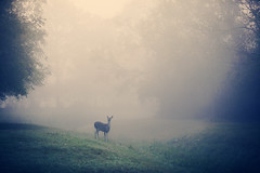 in the quiet (slight clutter) Tags: morning mist animal fog quiet texas deer