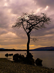 That tree again! (nightfollowsday) Tags: tree nature silhouette scotland panasonic lochlomond lx3 milarrochybay dmclx3