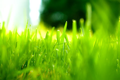 Day 90 - The grass is always greener