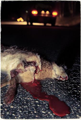 Roadkill_DSC7934