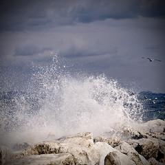 The power of nature (gabrielescotto) Tags: sea sky art nature rock island 50mm nikon bravo mare gull wave natura cielo nikkor ischia onda scogliera nikkor50mmf14 gabiano nikond80 gabrielescotto